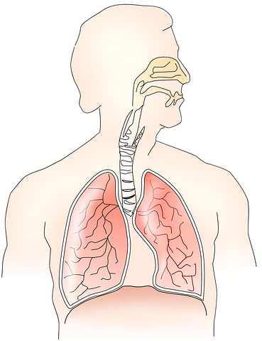 What's The Big Deal With Breathing?